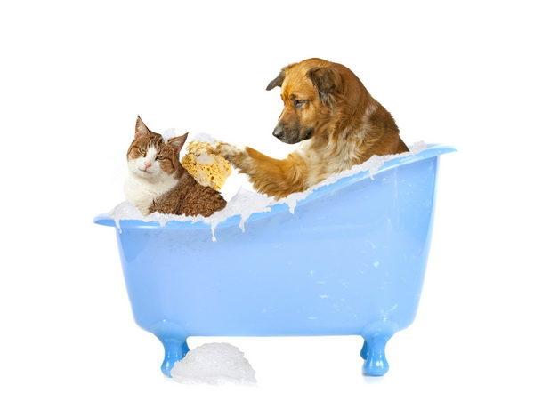 katzenwasche-hund-und-katze-in-der-badewanne