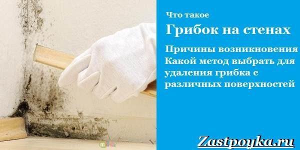 gribok-na-stenax-kak-izbavitsya-ot-gribka-na-stenax-10-4470208