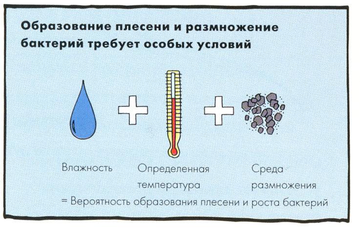 prichiny-pojavlenija-pleseni-3972786