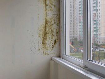 kak-izbavitsya-ot-pleseni-na-balkone-4-8802091