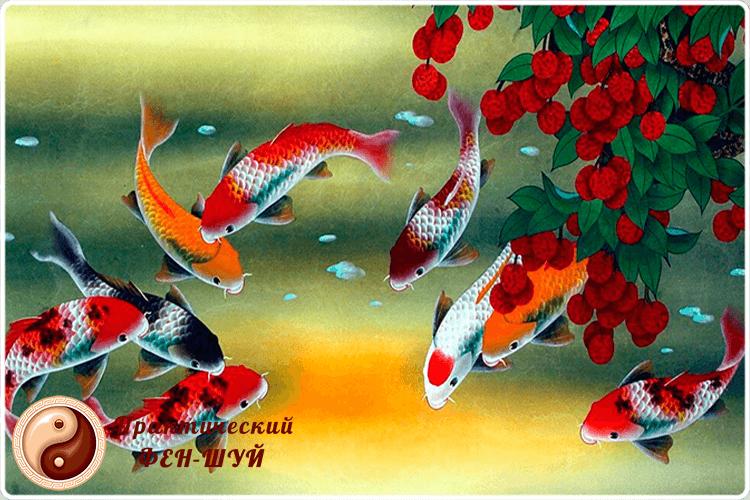 rybki-v-fen-shuy-6144320