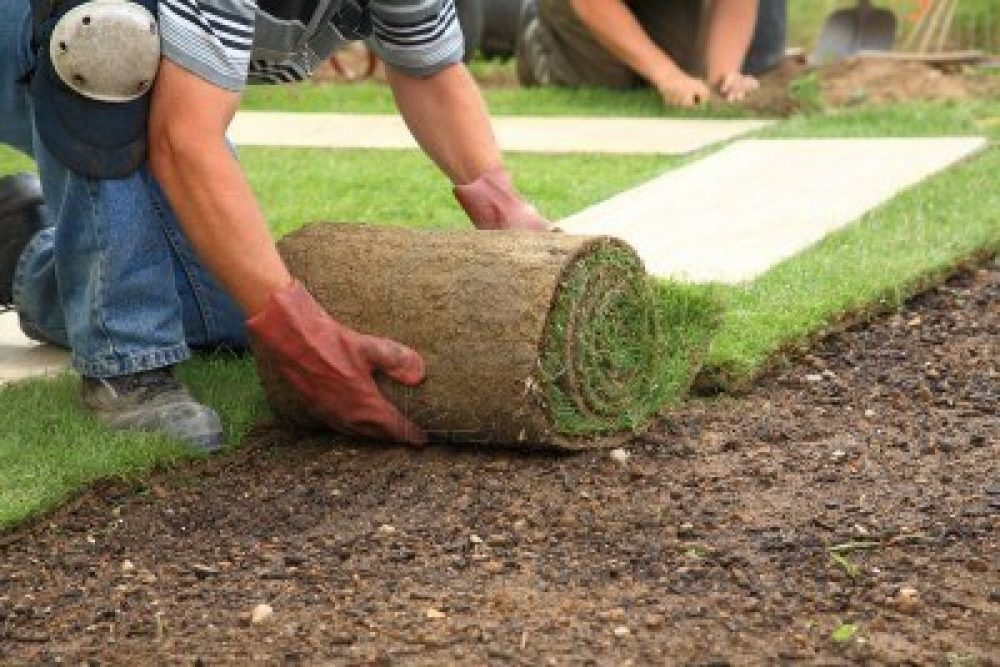 6850160-man-laying-sod-for-new-garden-lawn1-6755551