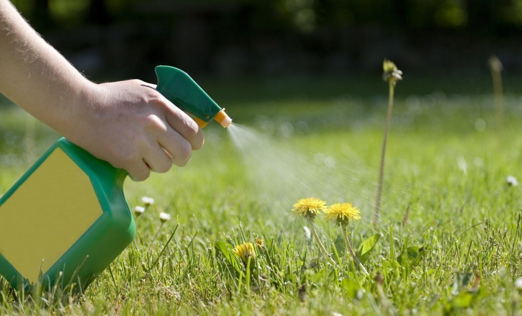spraying-the-dandelions-484016511-58b203553df78cdcd84583f91-1024x620-8968451