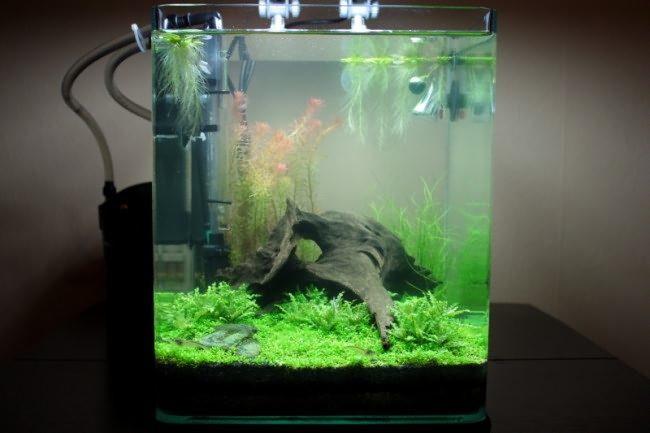 kak-ustanovit-filtr-v-domashnii-akvarium-4855894